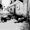 Palestine: Painful Memories Relived
