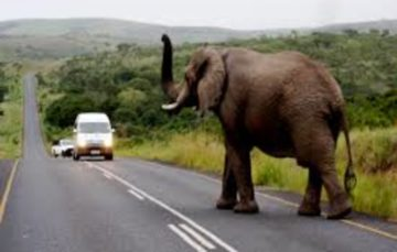 20  Safety Rules when Traveling in and around South Africa