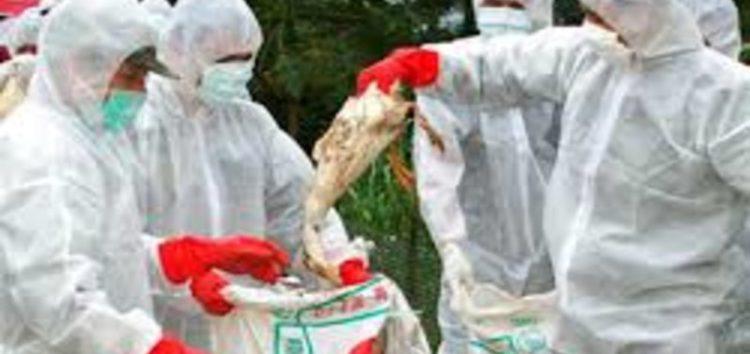 China confirms human bird flu case in Guizhou province