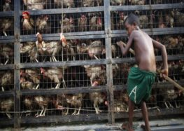 Outbreak of H5N1 bird flu at poultry farm in Dhaka