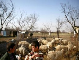 Displaced people of Syria's 'beehive' villages dream of return