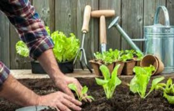 Ever pondered about the multiple benefits derived from gardening?