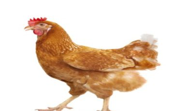 S.A.'s neighbours suspend imports of poultry amid avian flu crisis