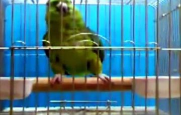 This parrot can recite Quraan and people are amazed
