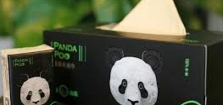 Chinese firm recycles panda poop into toilet paper