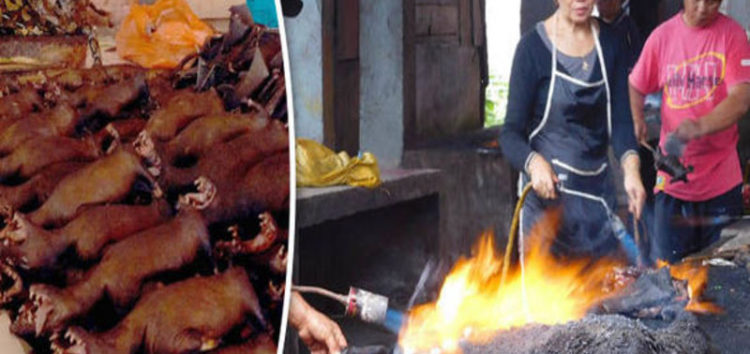Group urges Indonesia to shut cruel live animal markets where dogs are burnt alive
