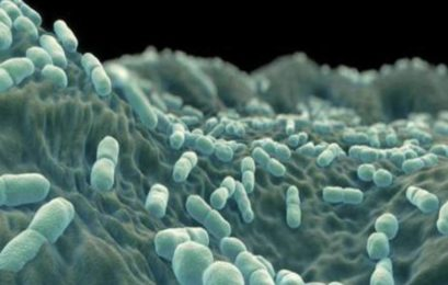 Listeriosis death toll rises to 107