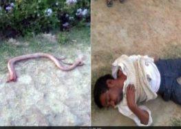 Indian farmer bites off snakes head in fit of revenge