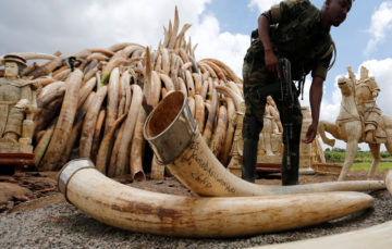UK bans trade of items made with ivory