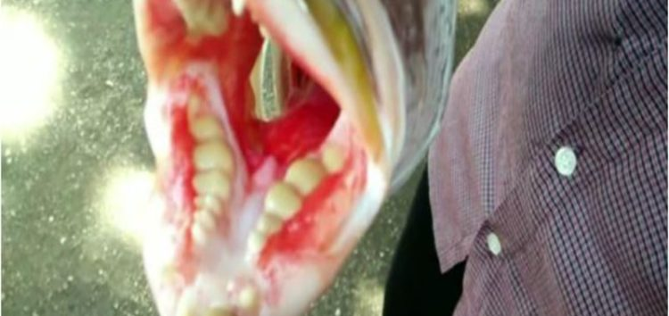 "Bizarre fish with ""human teeth"" shocks villagers in Indonesia"
