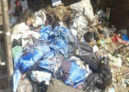 Egypt street cleaners find human organs in garbage