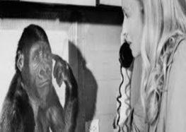 Koko the gorilla that sign undestood sign language has died
