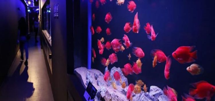 First of its kind Palestine Aquarium housing over 250 species opens in Ramallah