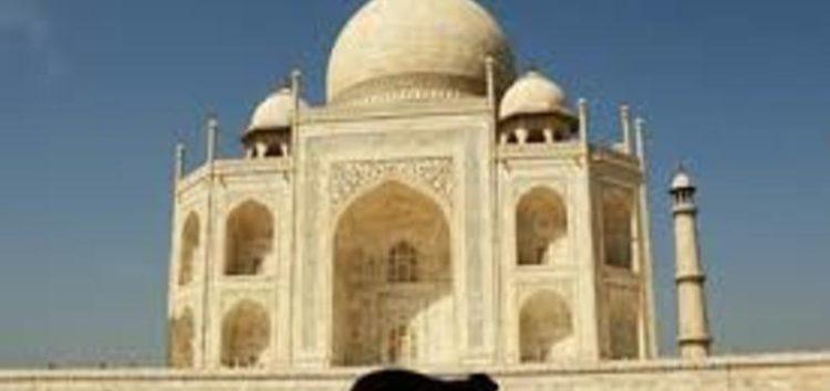 Monkey menace hounds the Taj Mahal