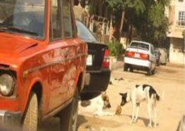 Egypt MP: Export dog meat for East Asia cuisine