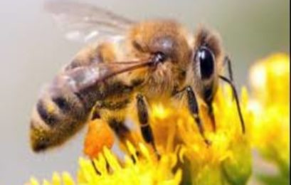 Egyptian beekeeper therapist uses venom to heal his patients