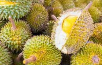 Passengers refuse to fly on Indonesian plane carrying Durian fruit cargo