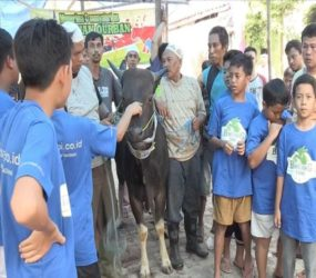 7 Indonesian kids sacrifice a cow after saving for a year #Qurbani1440