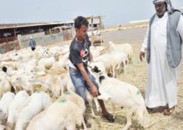 More than a million 'sacrificial' animals ready for Hajj