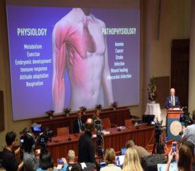 Trio wins Nobel Medicine Prize for work on cells, oxygen