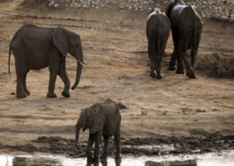 Drought-hit Zimbabwe readies mass wildlife migration