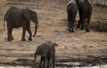 Drought-hit Zimbabwe readies mass wildlife migration