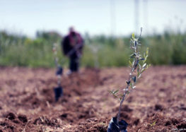 Land in eastern Gaza declared a disaster zone due to Israel use of herbicides