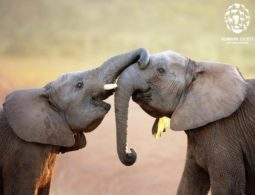 Botswana gets first test results on 281 elephant deaths