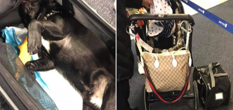 Dog dies after a United Airlines flight attendant forces it into the overhead compartment