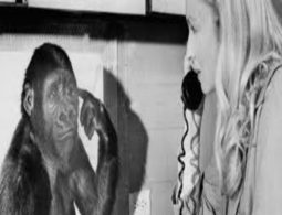 Koko the gorilla that sign undestood sign language has died