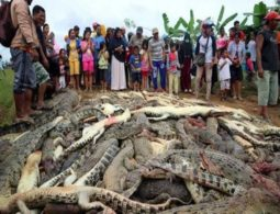Angry Indonesian mob slaughters almost 300 crocodiles in revenge attack