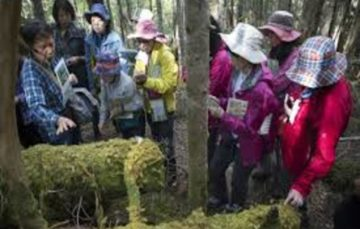 It's a small world: In Japan, moss wins hearts